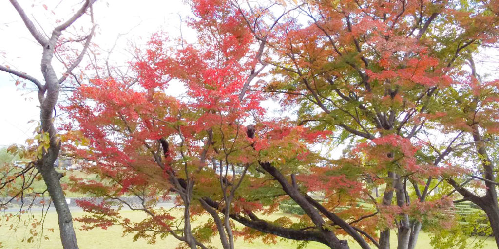 嵐山 紅葉 アジョシ 京都 韓国料理
